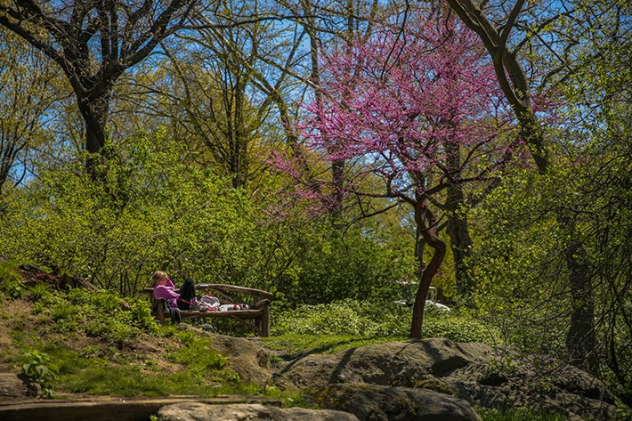 """The Park keeps us sane and gives us the spirit to keep going. It is a love affair that will never end."" Source: Social @schully Photo credit: Central Park Conservancy"