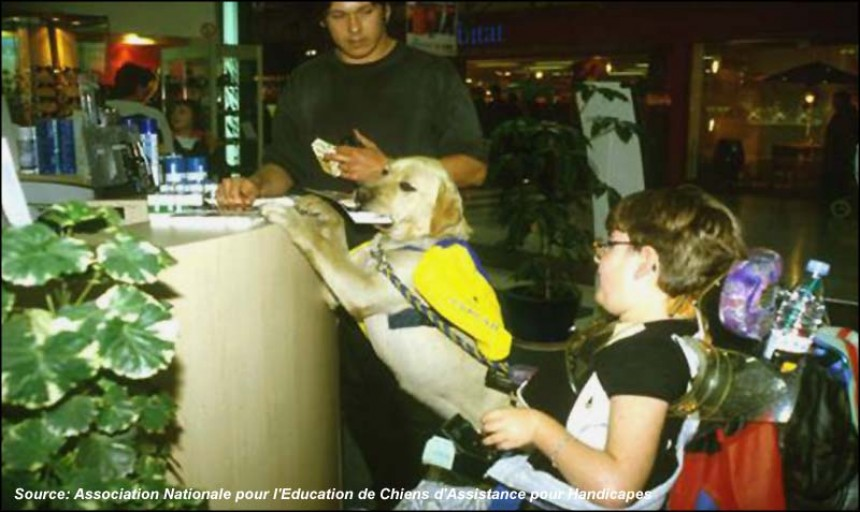 A dog assists a disabled child