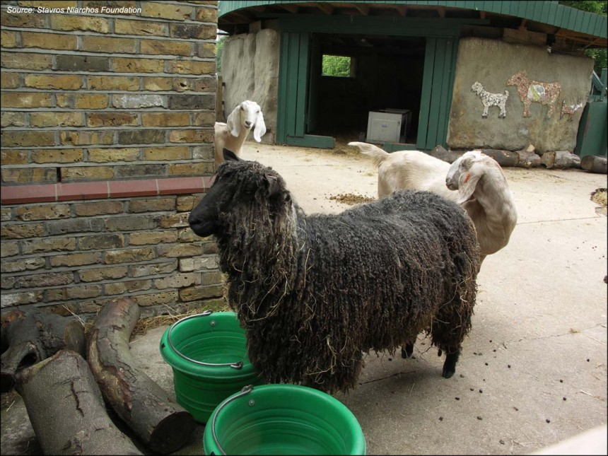 Source: Vauxhall City Farm