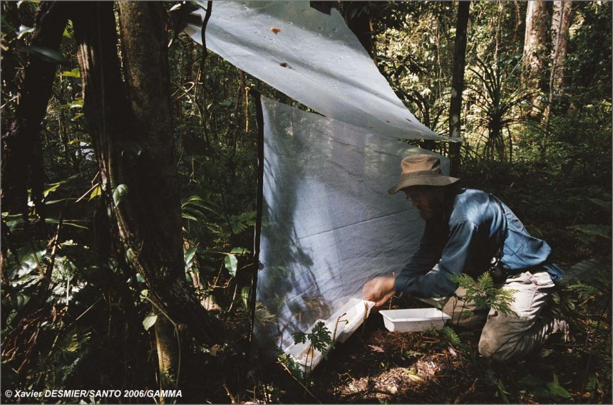 "Module ""Forests, Mountains and Rivers"". Alexey Tishechkin, entomologist, collects the insects that have fallen into a tr"