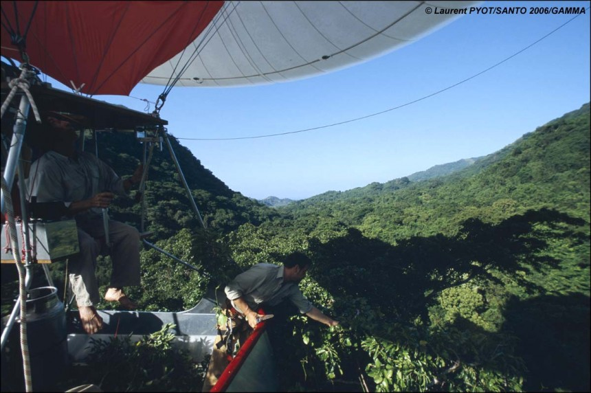 View from the carriage of the Canopy-Glider. Olivier Pascal collects plants from the forest canopy